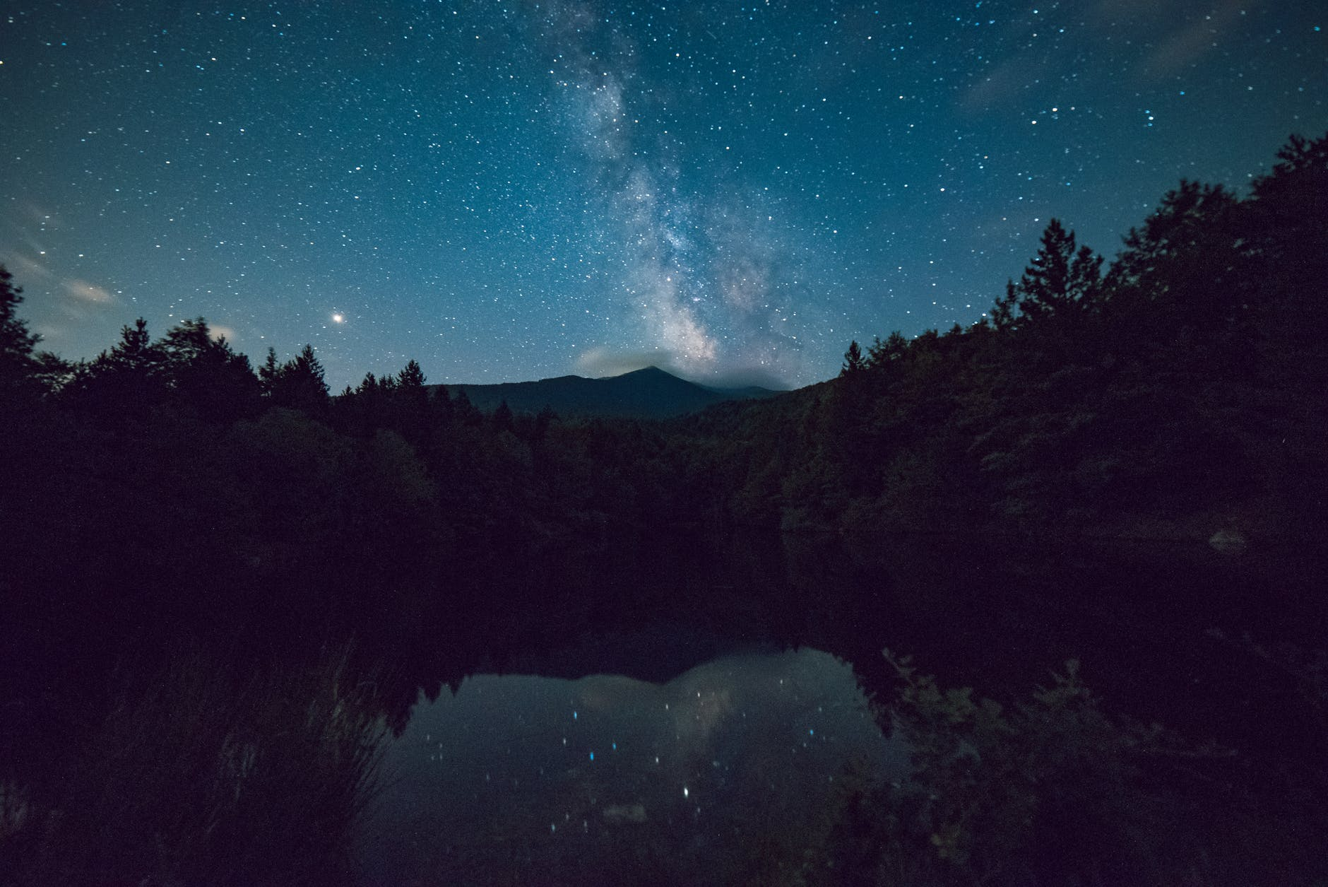 scenic view of forest during night time